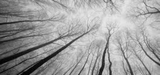 лес, деревья, небо, природа