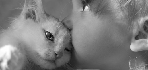 любовь к животным, ребенок и котенок