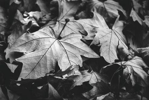 картинки черно-белые осени