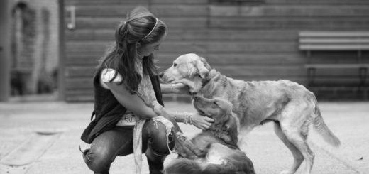 преданность, верность, собаки и люди