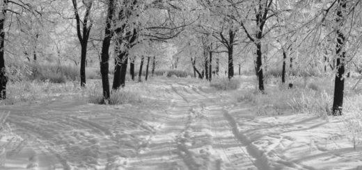 зимнее утро, зимняя аллея