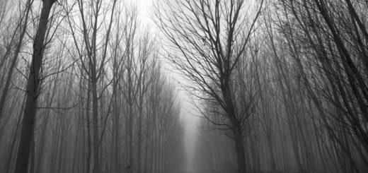 лес, парк, осенняя дорога