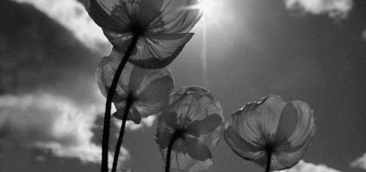 цветы, красота, солнце, весна