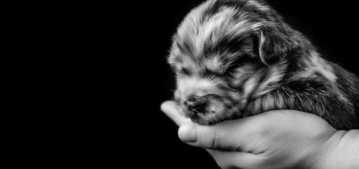 щенок на руке, собака, пёс