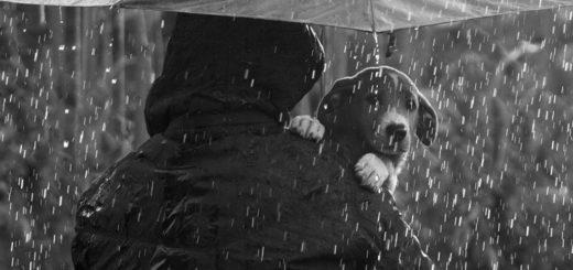 доброта к животным, собака - друг человека