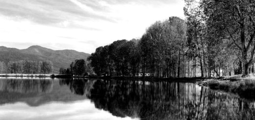природа, пейзаж, деревья и пруд