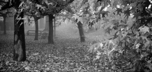 осень, осенняя пора, клен