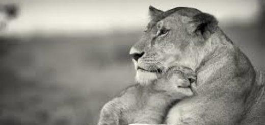 мать и дитя, семья, жизненные ценности