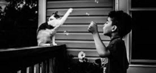 доброта, мальчик и кошка