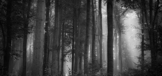 лес, роща, бор
