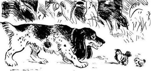 иллюстрация к стихотворению в прозе Воробей, Тургенев