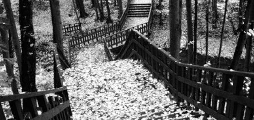 осенний вечер, дорога, усыпанная листвой