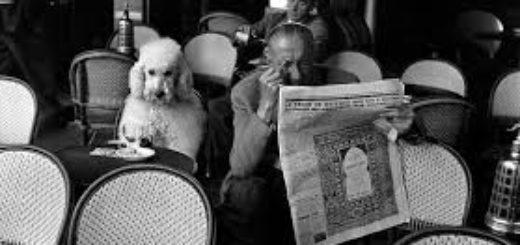 человек читает газету в ресторане с пуделем