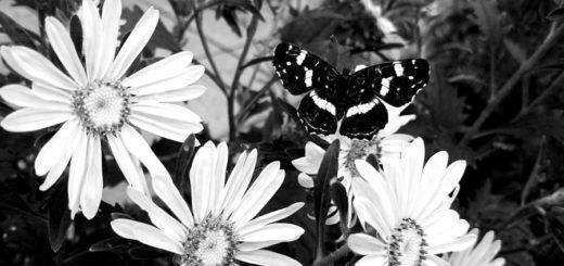 природа, цветы, бабочка