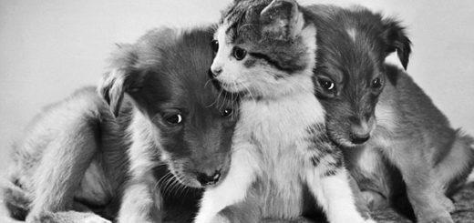 кошка с собакой, дружба