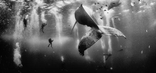 рыбы под водой, море