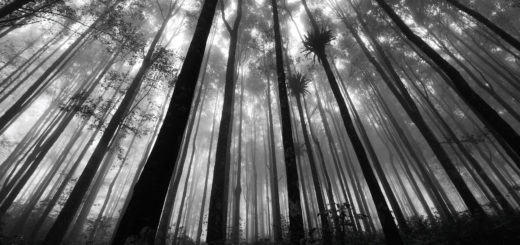 лес, чаща, бор