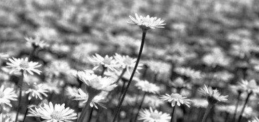 весенние цветы, луг, поле