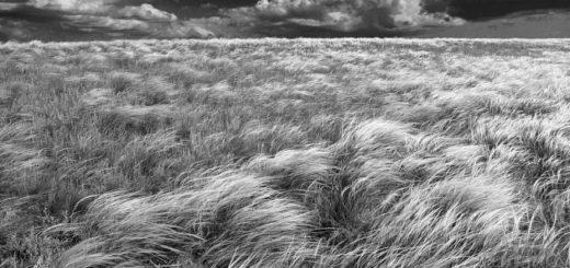 степь, поля, родные просторы