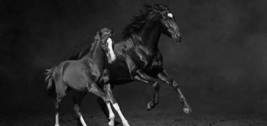 лошадиная фамилия