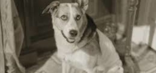 пёс Шарик, иллюстрация к повести Собачье сердце