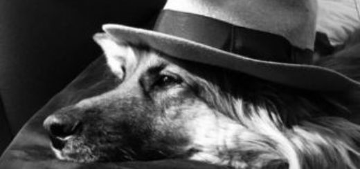 пес, собака, иллюстрация к рассказу Каштанка