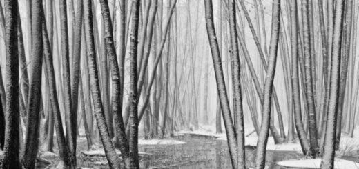 природа, деревья, болото