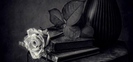 роза, книги, натюрморт
