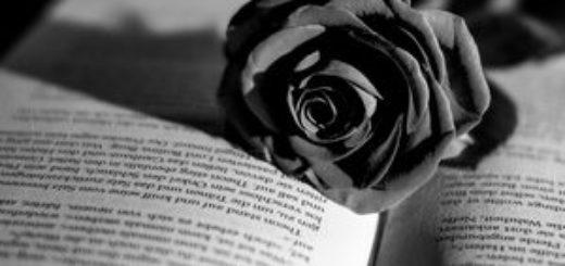 открытая книга и роза