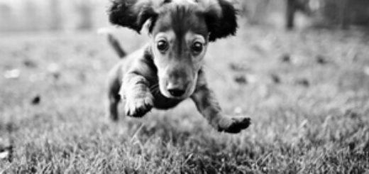 собака, щенок