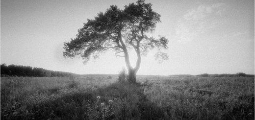 природа, луг, поле, дерево