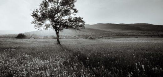 дерево, Кавказ, природа, горы