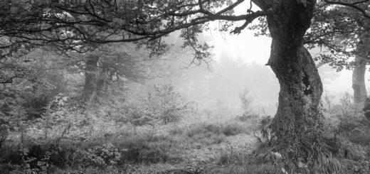 природа, опушка леса, луг, дуб