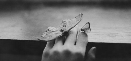 бабочки на руке