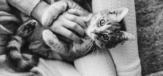 кошка на руках, доброта