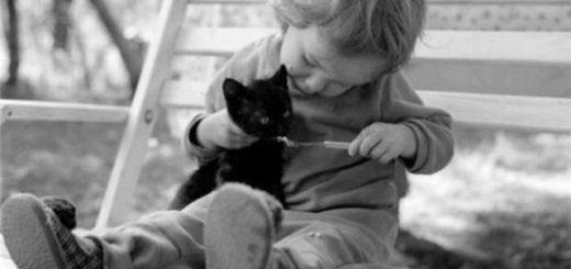 мальчик кормит котенка