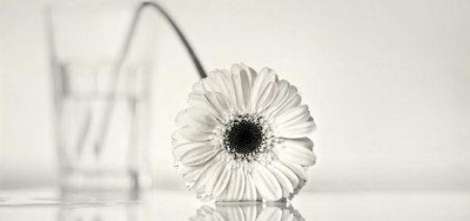 цветок на столе, грусть