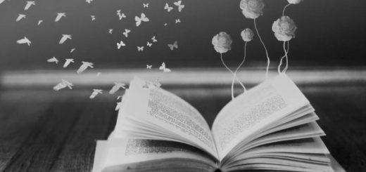 красивое фото книги